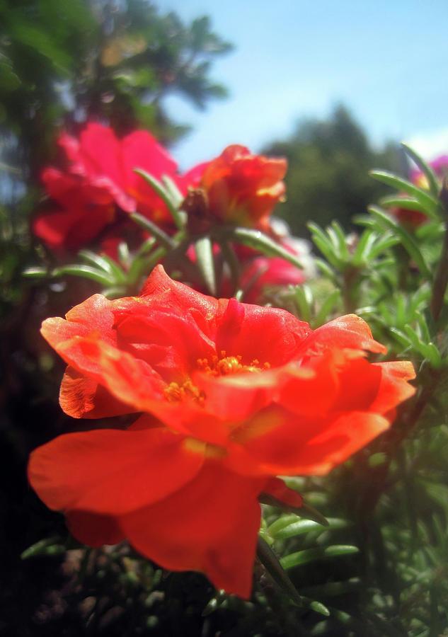 Flowers Photograph - Summer Beauties by Jaeda DeWalt