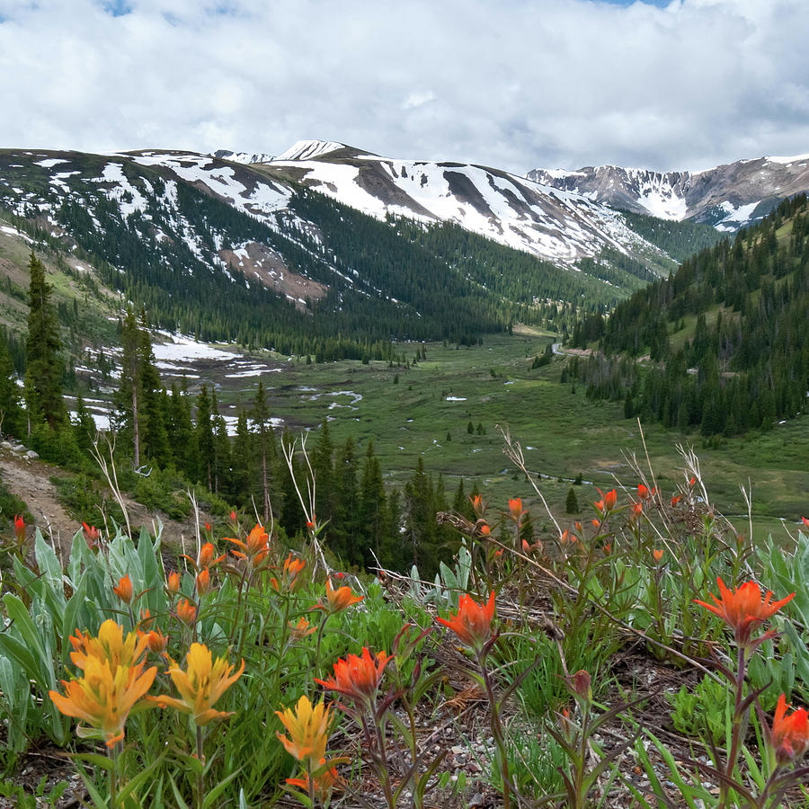 Summer Beneath Independence Pass by Cascade Colors