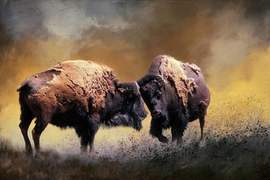 Bison Photograph - Summer Bison by Donna Kennedy
