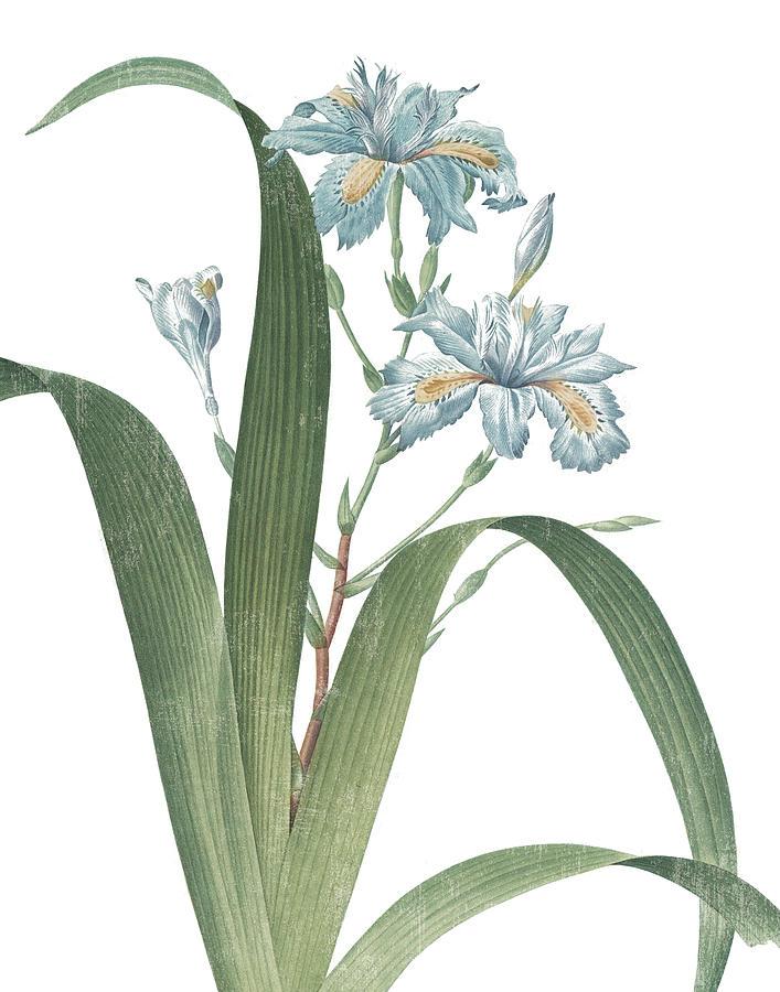 Blue Painting - Summer Botanicals IIi On White by Wild Apple Portfolio