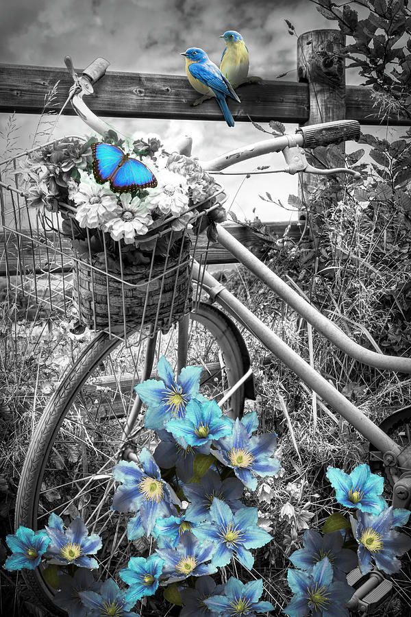 Barns Photograph - Summer Breeze On A Bicycle Black And White With Blue Color Selec by Debra and Dave Vanderlaan