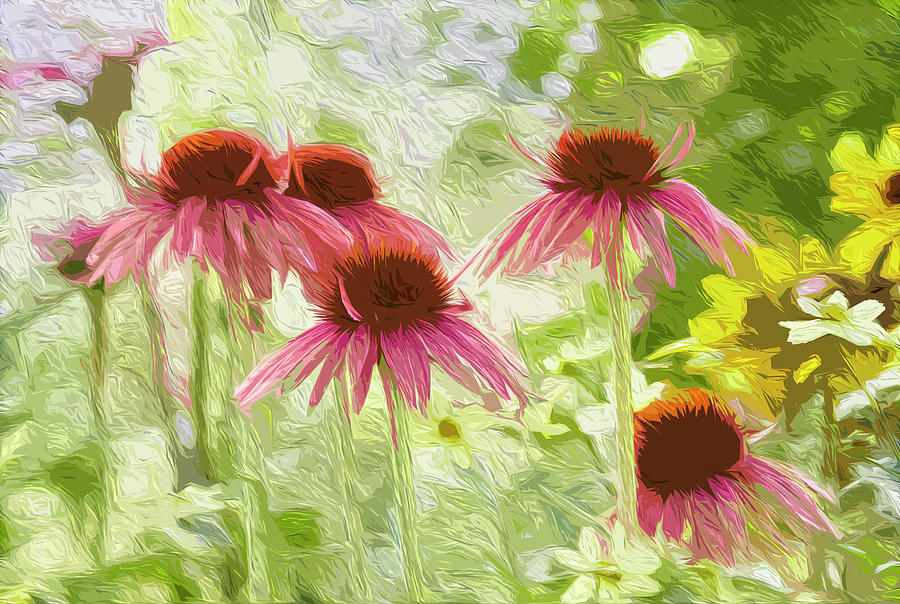Summer coneflowers by Garden Gate magazine