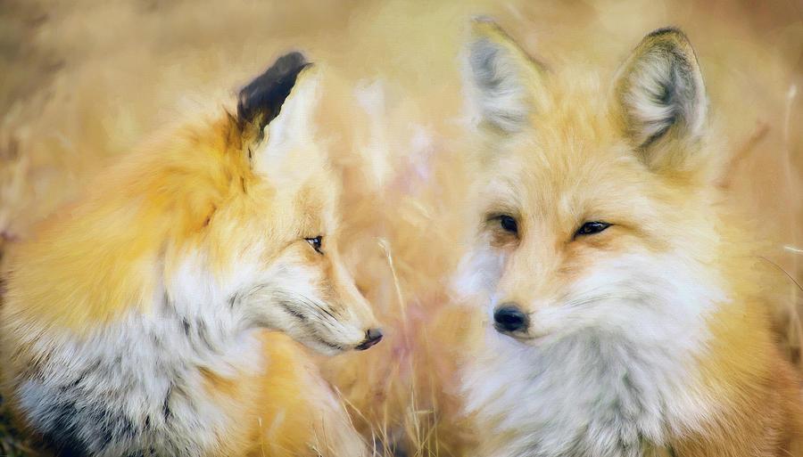 Texture Mixed Media - Summer Dreaming Foxes by Amanda Lakey