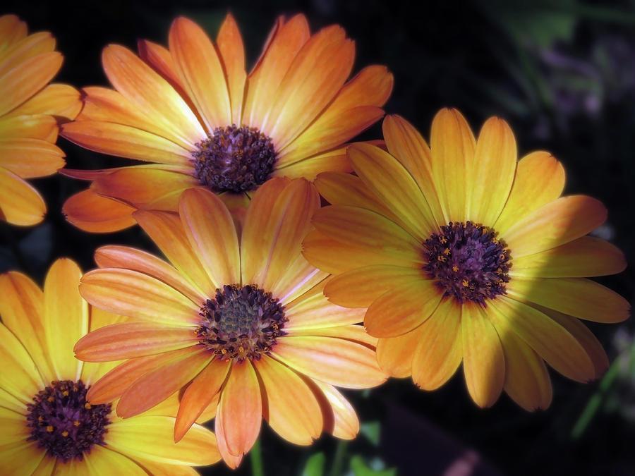 Summer Evening Flowers by Johanna Hurmerinta
