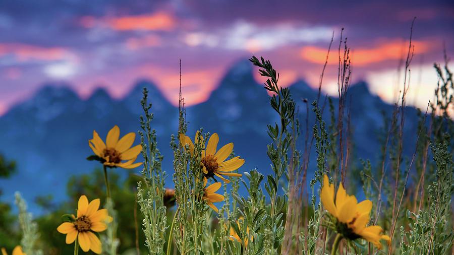 Summer Evening In Antelope Flats Photograph