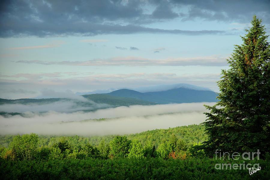 Summer Fog Photograph