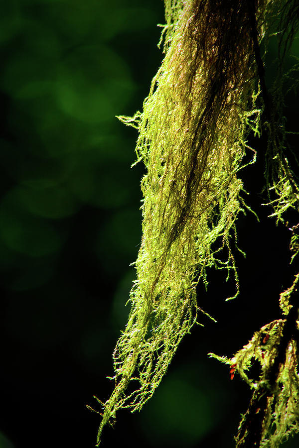 Summer Forest Moss by Tikvah's Hope