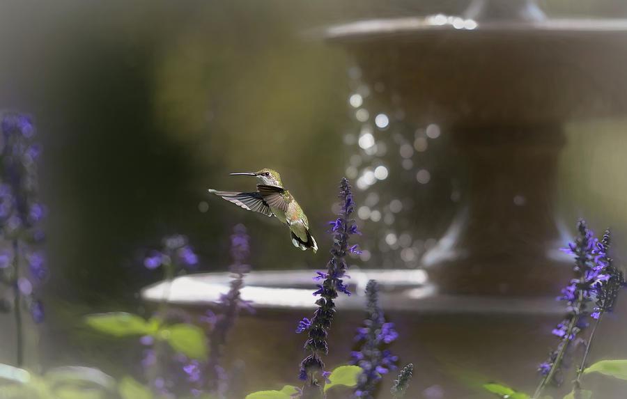 Summer Fountain  by Mary Lynn Giacomini