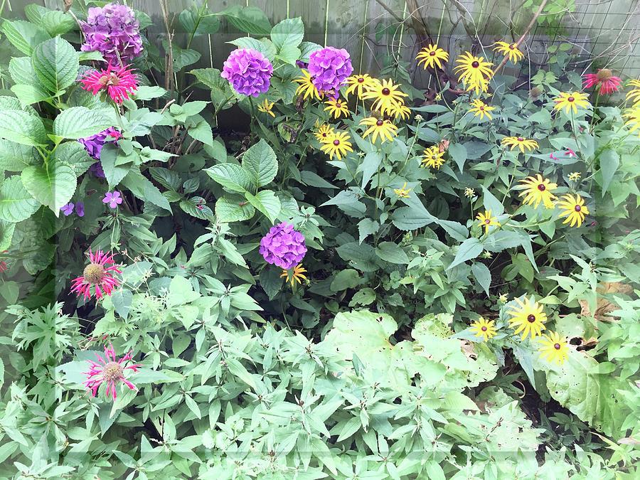 Summer Garden Amaya Photograph