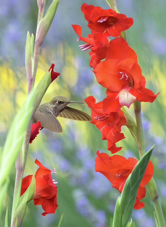 Summer Garden by Angie Vogel