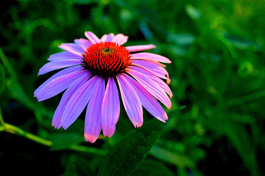 Summer Garden Cone Flower by Janis Kirstein