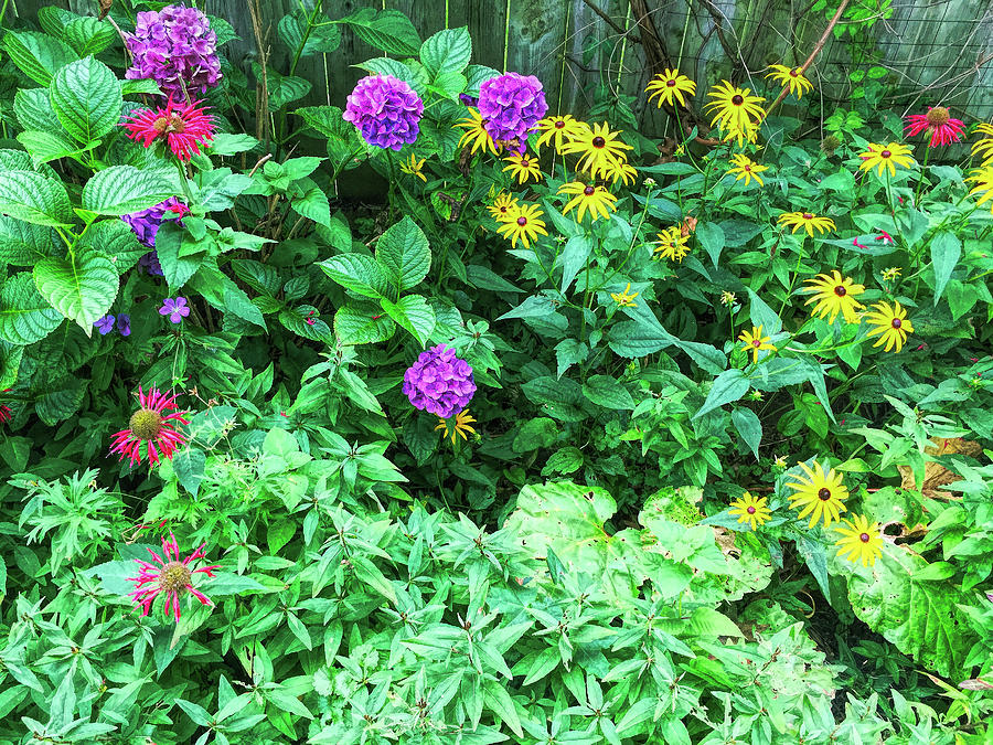 Summer Garden Hdr Photograph