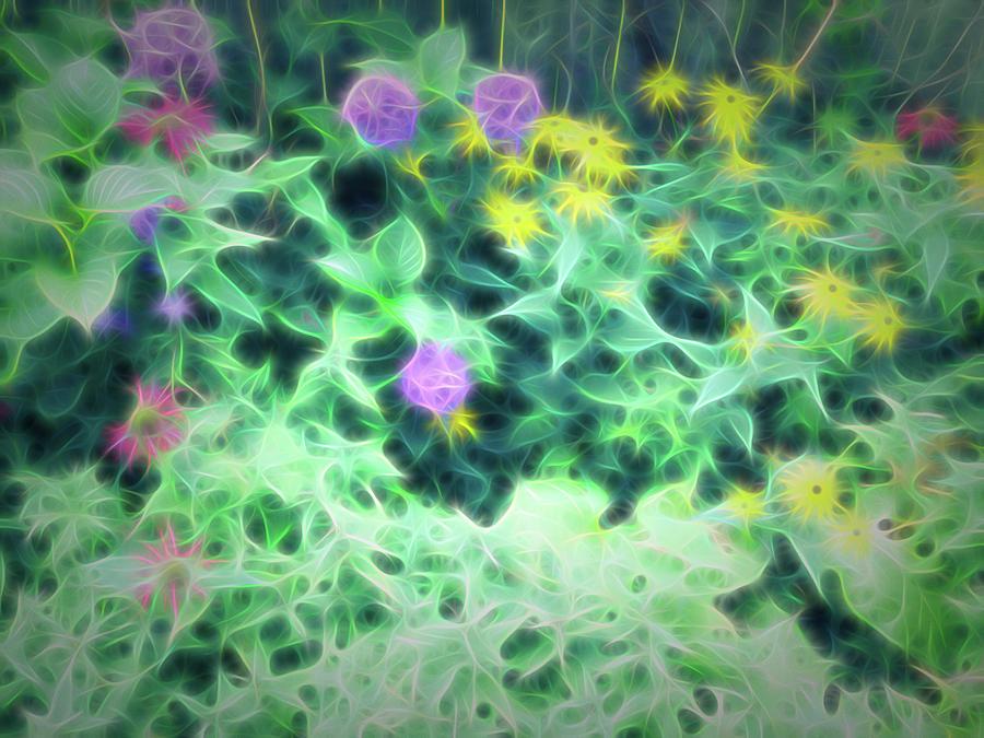 Summer Garden Soft Glow Photograph