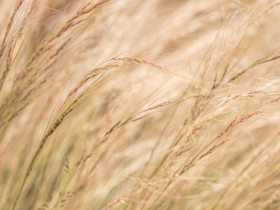 Summer Grass by Derek Dean
