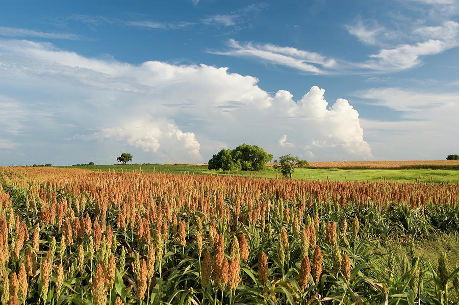 Summer Harvest Field Photograph by Dhuss
