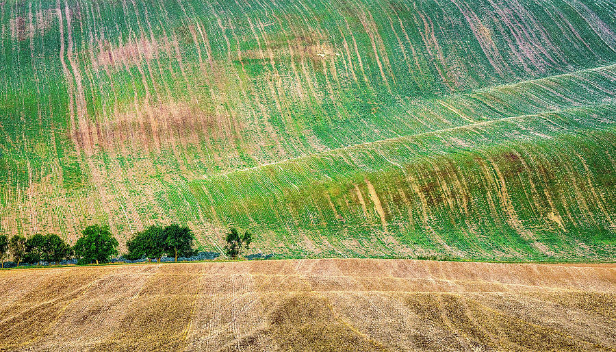 Moravia Photograph - Summer in Moravia by Andrei Dima