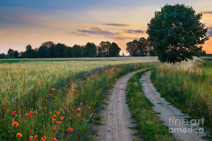 Country Photograph - Summer Landscape With Country Road And by Ysuel