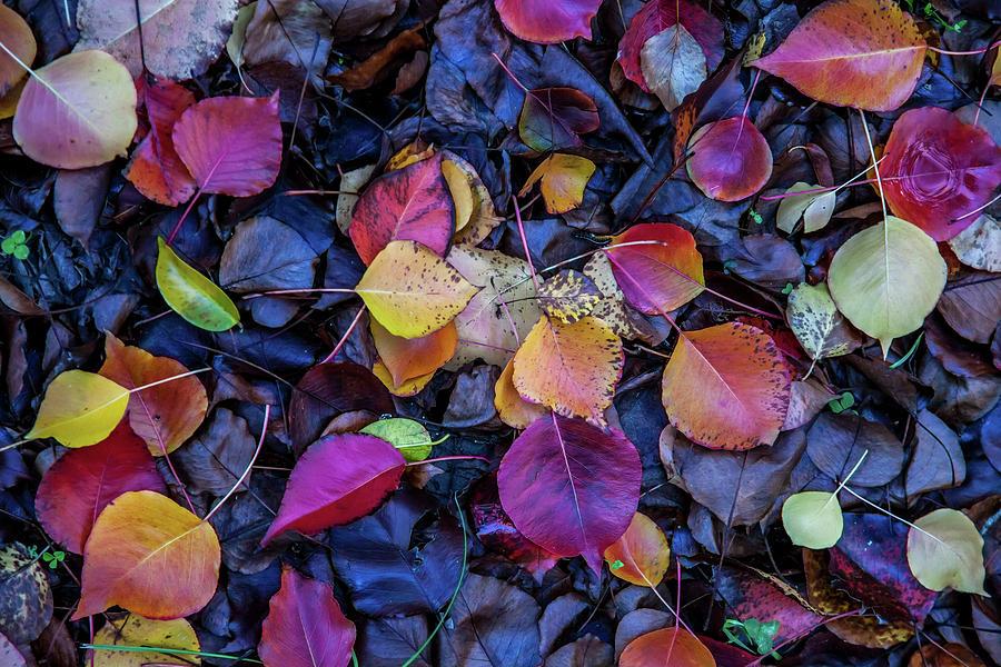 Autumn Leaves Photograph - Summer Leaves by Az Jackson