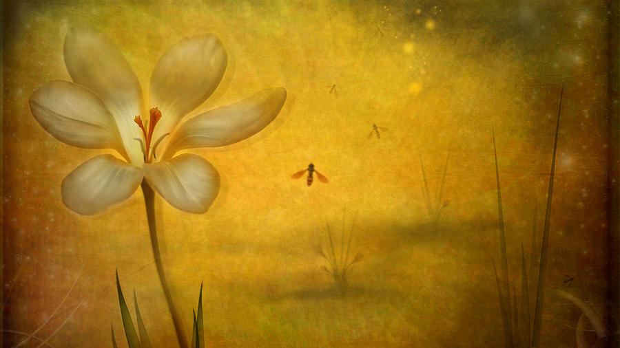 Flower Photograph - Summer by Lotte Andersen
