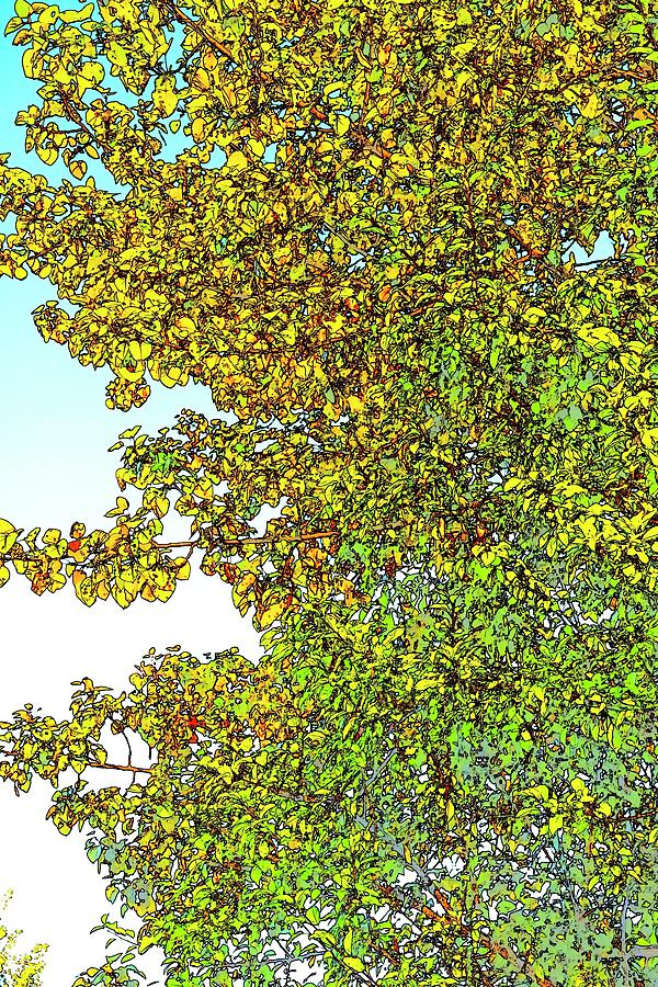 Summer Maple Color Sketch by Jerry Sodorff