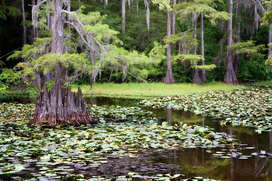 Algae Photograph - Summer Mill by Lana Trussell