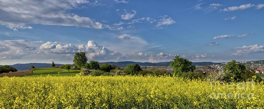 Summer on Lake Constance by Bernd Laeschke