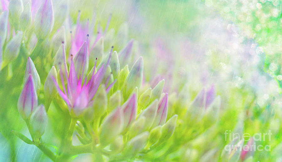 Summer Pastels by Elaine Manley