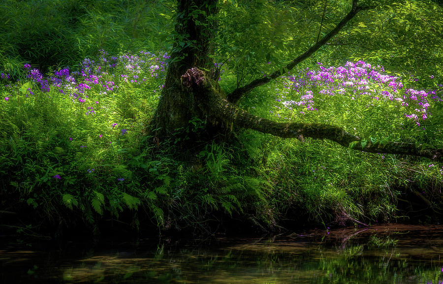 Summer Sanctuary Pisgah National Forest by Donnie Whitaker