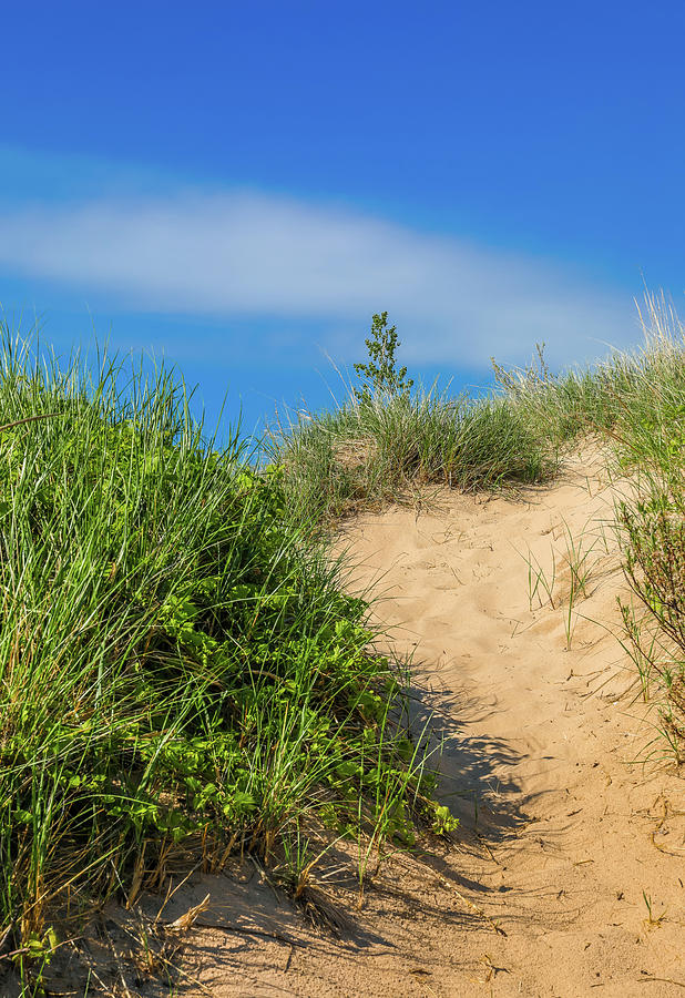 Summer Sand Dune Trail by Dan Sproul