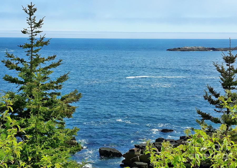Summer Sea Acadia by Tracy Ruckman