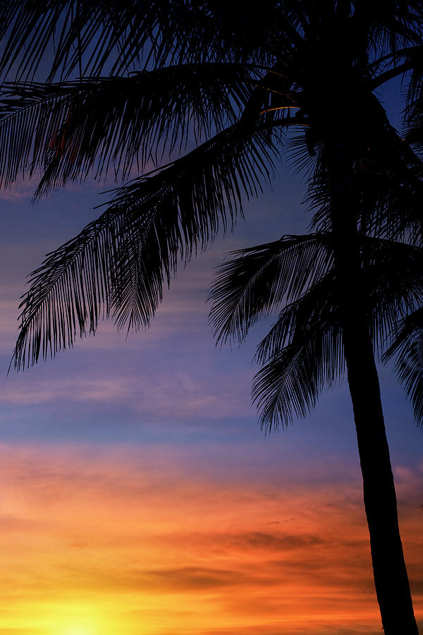 Summer Sky - Sunset Palm Trees by Laura Fasulo