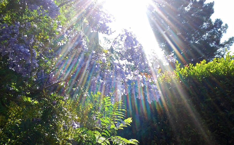 Summer Solstice 2017 002 by Michael Genevro