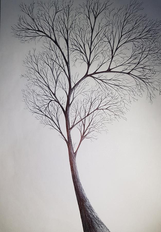 Summer Tree Drawing
