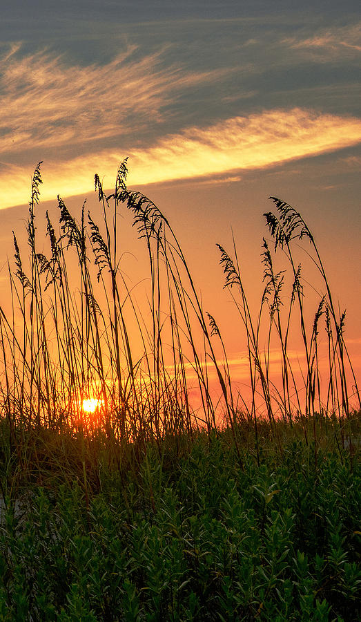 Summer Vibe by John Harding