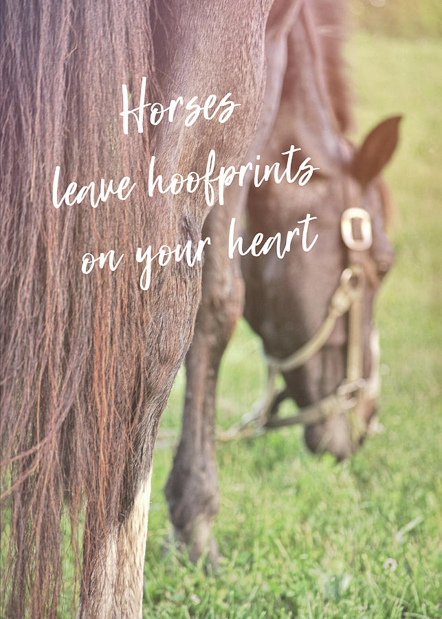 SUMMER VIEWS quote by Dressage Design