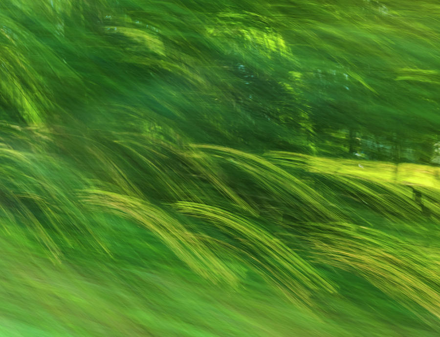 Summer Waves Of Green by Dan Sproul