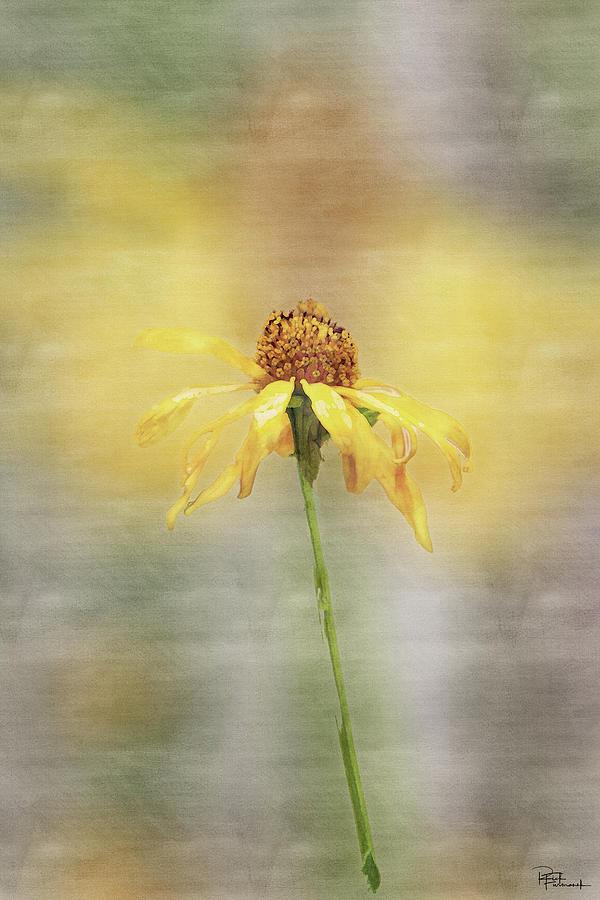 Summer's Reward in Digital Watercolor by Rick Furmanek