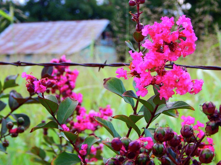 summertime at the home place by Virginia Kay White