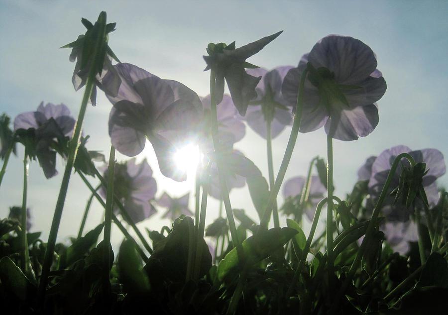 Sun and flowers by Jaeda DeWalt