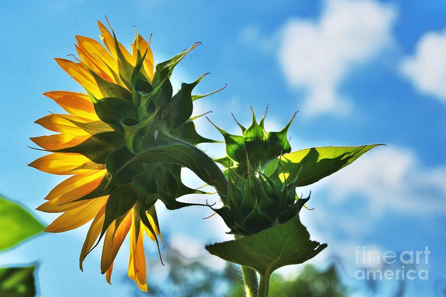 Sun Catcher by Joseph Perno