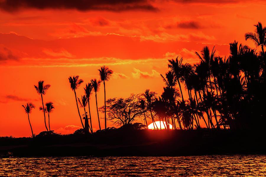 Sun Fire through the Palms by John Bauer