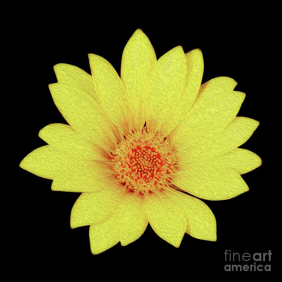 Sun Flower Digital Art by Kenneth Montgomery