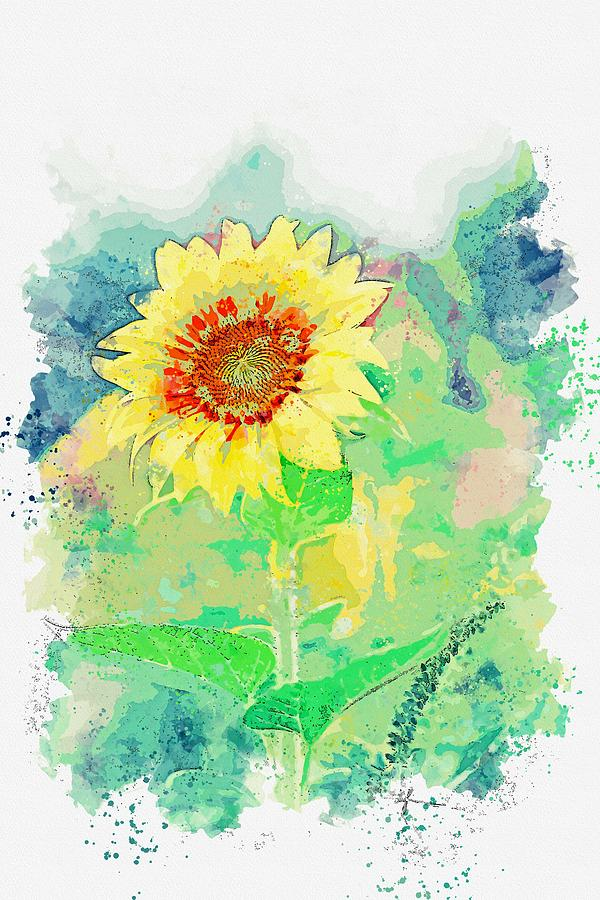 Sunflower Painting - Sun Flower Watercolor By Ahmet Asar by Ahmet Asar