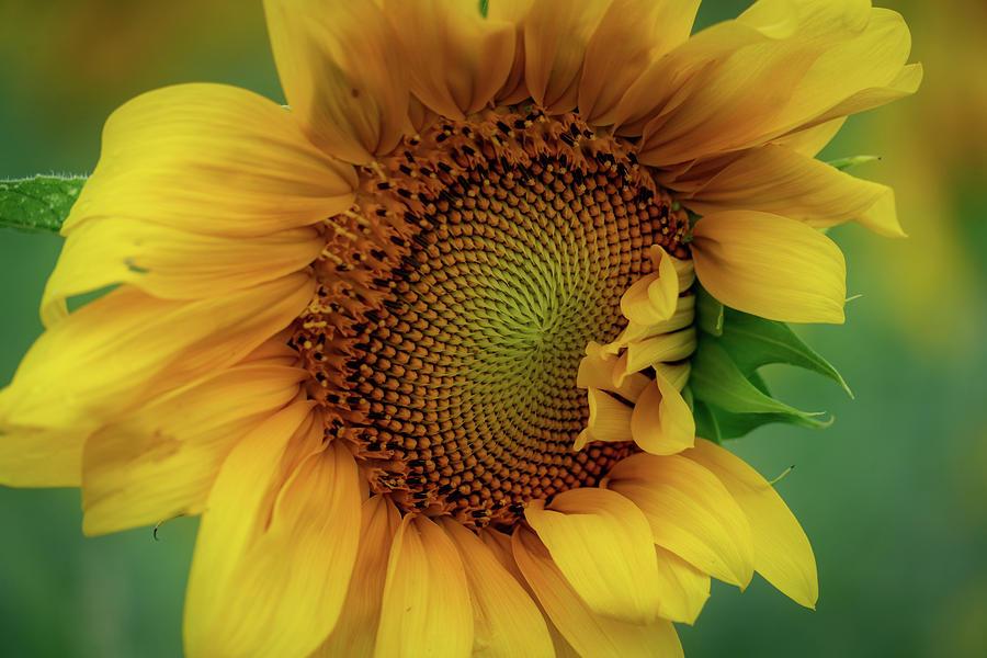Sun Happy by Marzena Grabczynska Lorenc