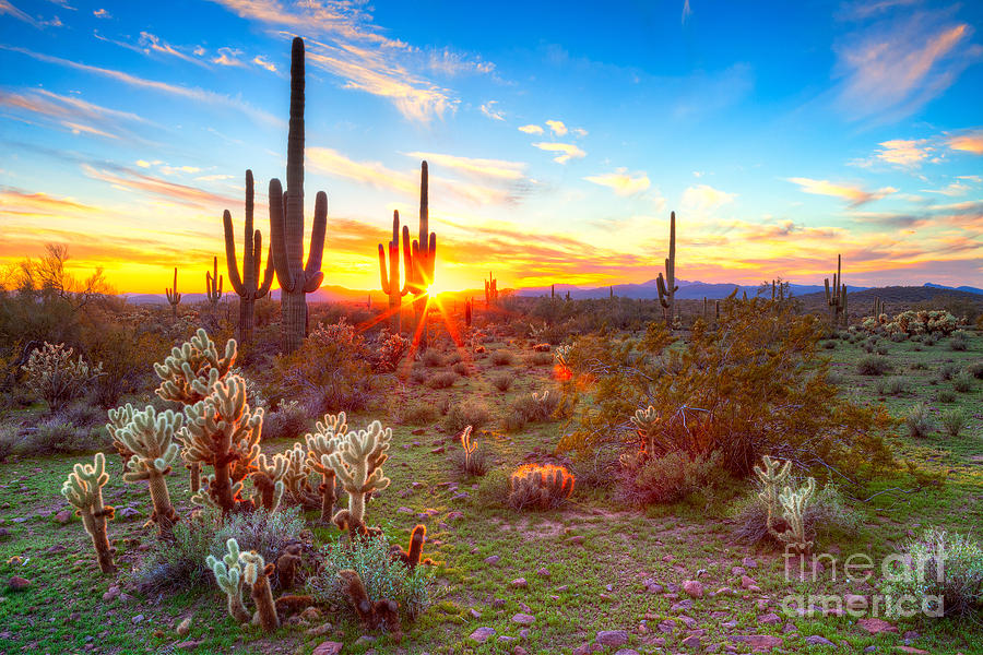 Sky Photograph - Sun Is Setting Between Saguaros, In by Anton Foltin