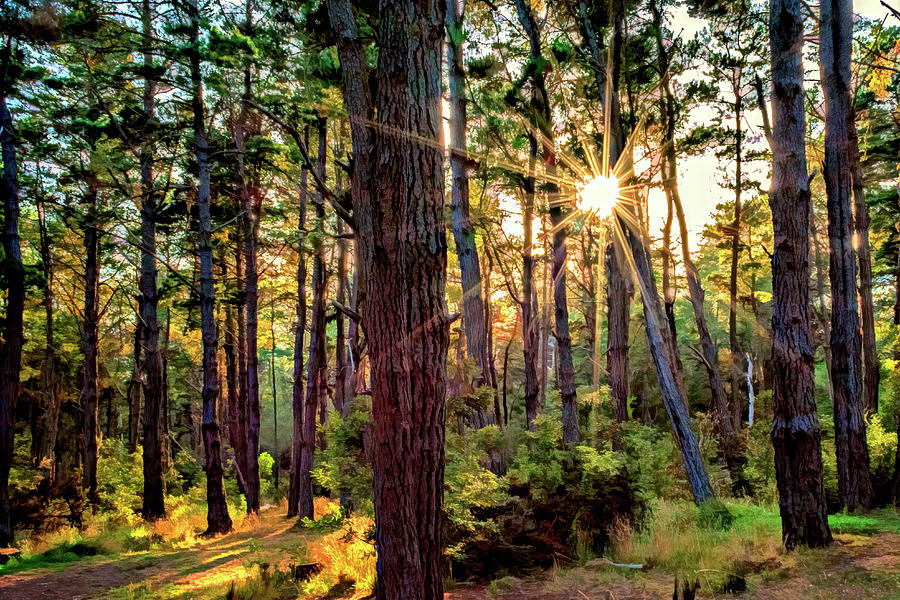 Sunlit Pines by Maria Coulson