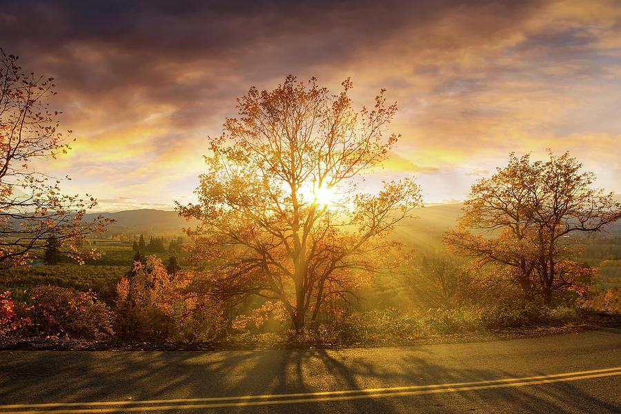Sun Photograph - Sun Rays Through Trees During Sunset by David Gn