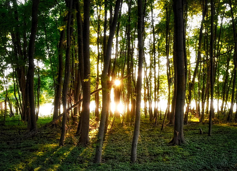 Woods Photograph - Sun Slivers by Patrick Murphy