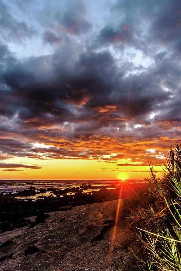 Sun Spikes at the Beach by John Bauer