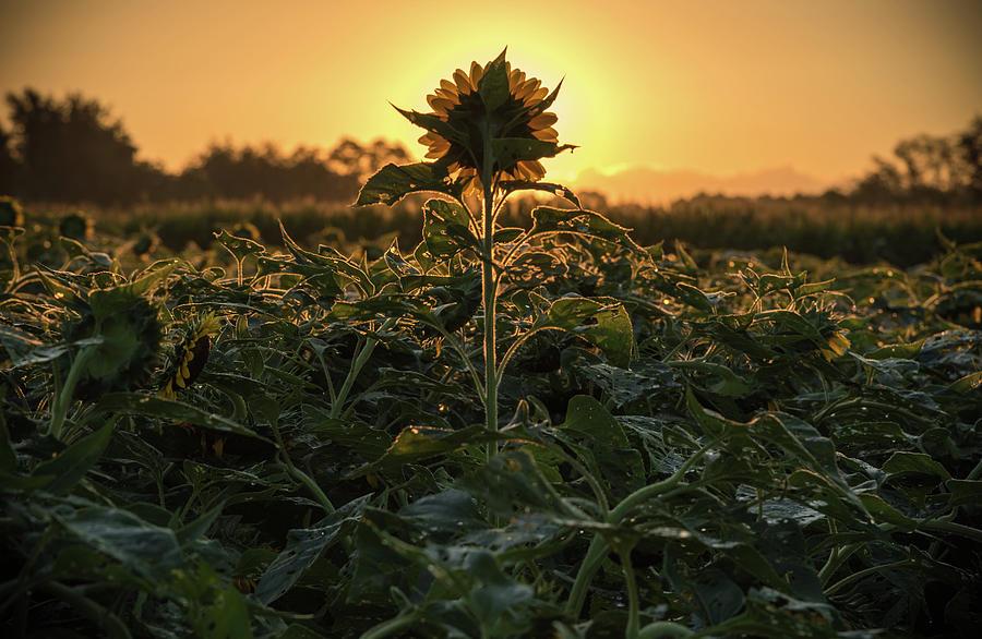 Sun Spot by Kristopher Schoenleber